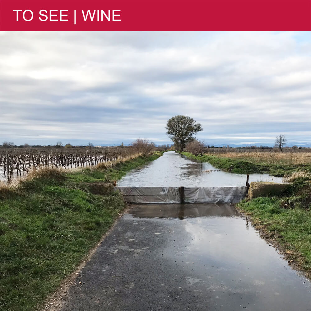 Discover why the Languedoc vineyards flood every Winter