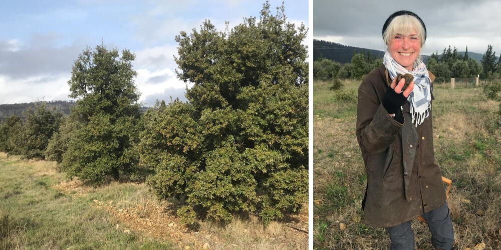 truffle hunt Mas d'Antonin